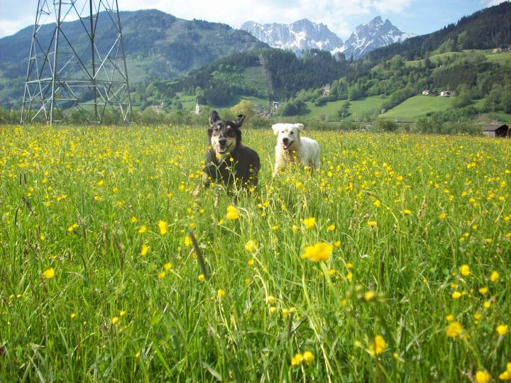 Hunde am Gaishorner See
